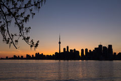 Toronto Sunset Silhouette with part of a tree on the left and co Royalty Free Stock Photo