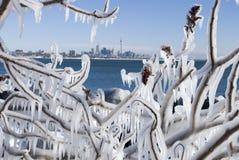 toronto vinter Royaltyfri Fotografi