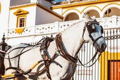 Toros de Sevilla f?r Seville verkliga Maestranza tjurf?ktningsarenaplaza i andalusia Spanien royaltyfri fotografi