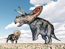 Torosaurus del dinosauro Immagine Stock Libera da Diritti