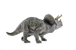 Torosaurus Dinosaur Royalty Free Stock Image