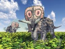 Torosaurus do dinossauro ilustração stock