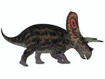 Torosaurus Profile Stock Photos