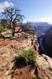 Toroweap Point, Grand Canyon Royalty Free Stock Image