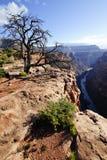 Toroweap punkt, Grand Canyon Royaltyfri Bild