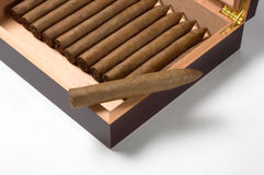 Torpedo cigar with humidor. Luxury humidor with torpedo handrolled cigars in a maduro leaf wrapper Royalty Free Stock Photos