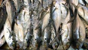 Torpedo Scad-Fische lizenzfreies stockfoto