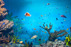 Torpical fishes at Seoul Coex Oceanarium Royalty Free Stock Image