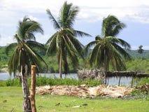 Torpical landskap i karibiskt Arkivbilder