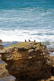 Torquay-Strand - Australien lizenzfreie stockfotografie