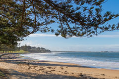 Torquay surf beach promenade along Norfolk Pine trees in Victori. View of Torquay surf beach promenade along Norfolk Pine trees on foreshore in Victoria Royalty Free Stock Image