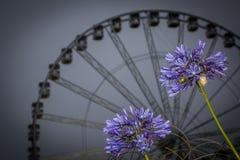 Torquay Wheel Royalty Free Stock Photos