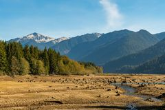 Torr bagare Lake med tr?dstubbar in i jordningen att vatten har l?mnat synligt med berg och skogen i bakgrunden arkivbild