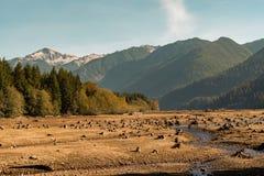 Torr bagare Lake med tr?dstubbar in i jordningen att vatten har l?mnat synligt med berg och skogen i bakgrunden fotografering för bildbyråer