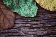 Torr bakgrund för fjärilsträdblad Royaltyfria Foton