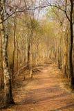 Torr bakgrund för skogbananatur arkivbilder