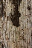 Torr bakgrund för textur för trädskäll foto Natur arkivfoto