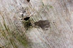 Torr bakgrund för textur för trädskäll foto Natur royaltyfri bild