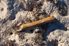 Torr bambu på sand Royaltyfri Fotografi