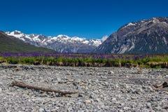 Torr bergflodbädd med ett fält av lupin Royaltyfri Bild