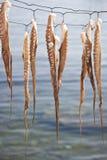 torr bläckfisk som ställs in till arkivfoton