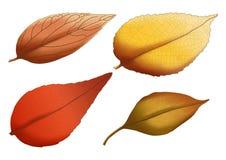Torr bladbruntmålarfärg och sommar vektor illustrationer