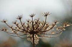 Torr blomma Arkivbilder