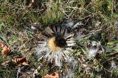 Torr blomma från trä arkivfoton