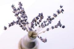 torr blommalavendel Arkivfoto