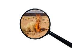 Torr brinnande buske i den Sahara ?knen arkivfoto