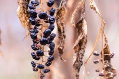 Torr brun växtcloseupbokeh Royaltyfria Foton