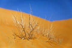 Torr buske i öknen Arkivfoto