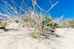 Torr buske i sandig öken arkivbild