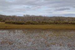 Torr buske som reflekterar i ett grunt damm i avlägsna Arthur Pieman Conservation Area, avlägsen Tasmanien västkusten arkivbild