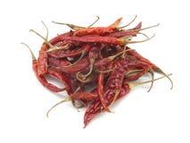 Torr chili på isolatvitbakgrund Arkivbild