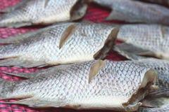 Torr eller torkad fisk för rimmad fisk Royaltyfria Bilder