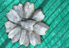 Torr eller torkad fisk för rimmad fisk Royaltyfria Foton