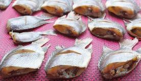 Torr eller torkad fisk för rimmad fisk Royaltyfri Fotografi