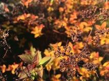Torr filial av en buske på bakgrunden av gula sidor arkivfoto