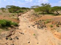 Torr flodbädd. Inte långväga skog. Afrika Kenya. Arkivbild
