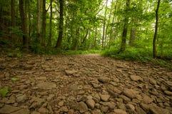Torr flodsäng i en skog Royaltyfri Bild