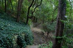 Torr flodsäng i en skog Royaltyfri Foto