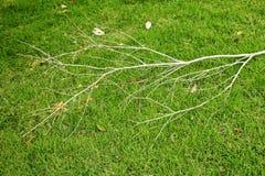 Torr frunch på grönt gräs Royaltyfri Bild