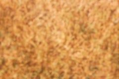 torr grässlättbakgrund för abstrakt begrepp, naturliga suddiga bakgrunder Royaltyfria Foton