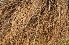 Torr gul textur för sugrörgräsbakgrund royaltyfria bilder