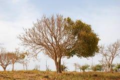 torr half tree Royaltyfri Fotografi