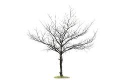 torr isolerad växt Arkivbilder
