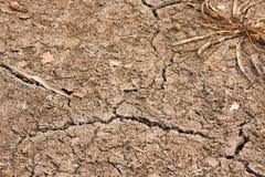 Torr jord av den torkade-upp beh?llaren med en Bush av havsv?xt och sprickor arkivbilder