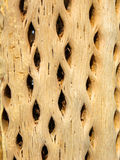 torr kaktus Arkivfoto