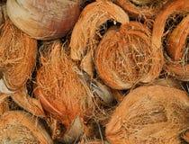 torr kokosnöt Arkivbild